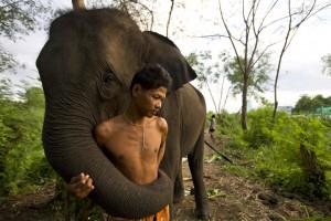 """""""Egy elefánt agya hatalmas, nagyjából hatszor akkora, mint egy emberi agy."""""""