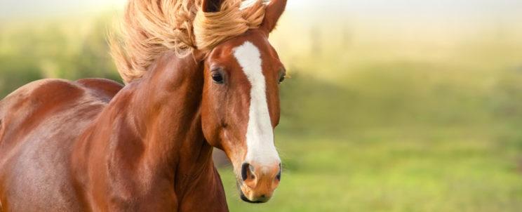 Ajándékötlet: lovasbérletet mindenkinek!