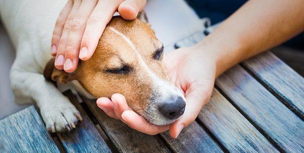 Megsérült, vagy beteg kedvence szállításra szorul? Bízza állatmentőre a feladatot!